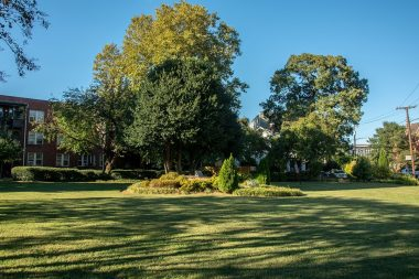 Norfolk's Yellow Fever Park on a peaceful summer day